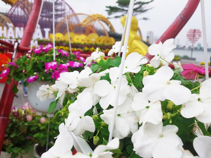 Những bông hoa tuyệt đẹp bố trí dọc bờ sông Hàn.