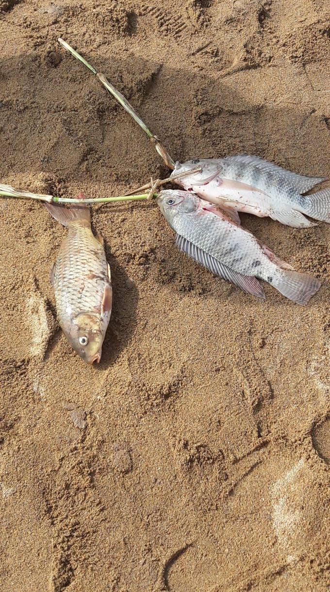 Vị trí có cá chết theo báo cáo của Đồn công an xã Tam Lãnh,cách điểm bờ hồ bị vỡ khoảng 01 km