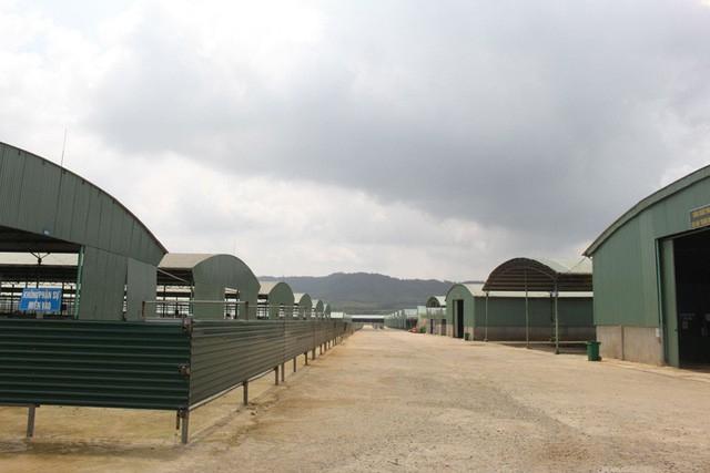 Những chuồng bò trống rỗng của Công ty Bình Hà.