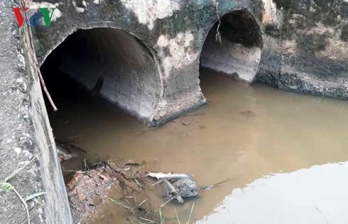Cá chết ngay ở miệng cống nước thải hai bên quốc lộ 1A dẫn ra cánh đồng thôn Hà Thanh.