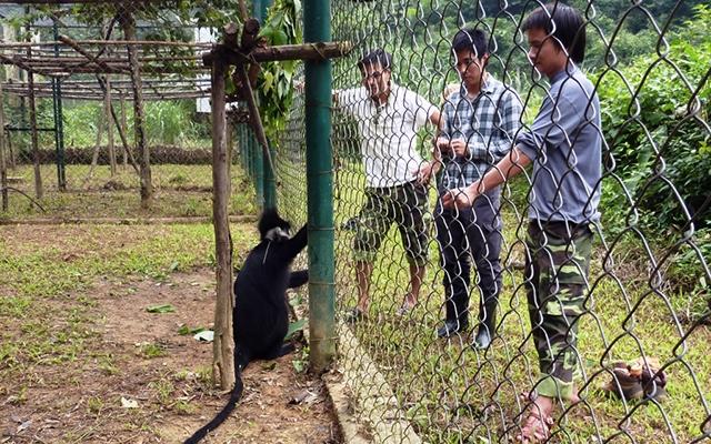 Chăm sóc voọc tại Trung tâm Cứu hộ, bảo tồn và phát triển sinh vật Vườn quốc gia Phong Nha - Kẻ Bàng.