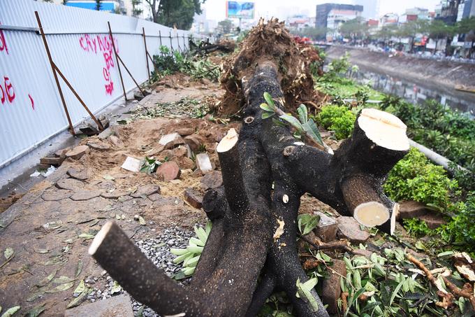Vỉa hè có hơn 470 cây xanh. Sở Xây dựng đã thẩm định, cho phép di chuyển 370 cây, chặt hạ hơn 100 cây do bị sâu bệnh, hoặc hình dáng, sự phát triển không phù hợp để trồng lại.