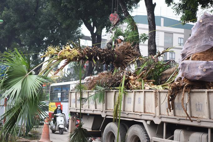 Số cây có thể trồng được đưa về ô đất trống thuộc nút giao đại lộ Thăng Long với tỉnh lộ 70, quận Nam Từ Liêm. Kinh phí chặt hạ, đánh chuyển cây xanh trên tuyến đường hết khoảng 3,6 tỷ đồng.