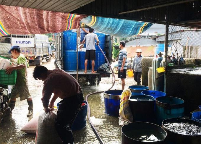 Bến cá ở làng cá bè La Ngà nhộn nhịp khi thương lái vào lấy cá đem đi tiêu thụ.