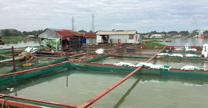 Một hộ nuôi cá bè trên sông La Ngà.