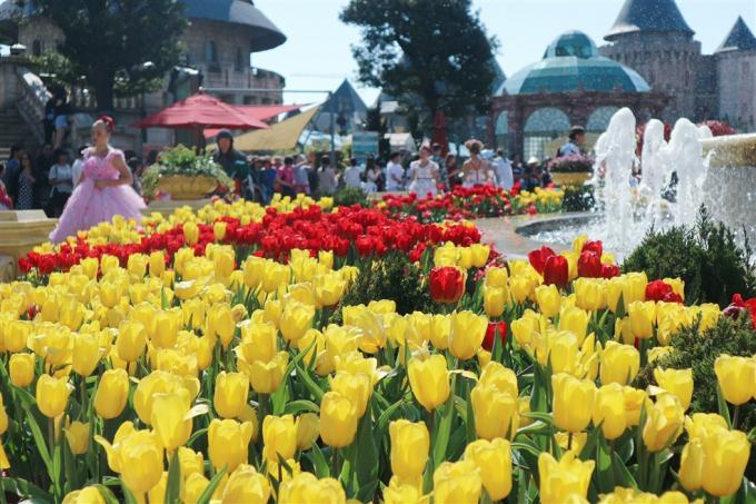 """Đặc biệt, dịp Tết Kỷ Hợi này, từ 14/2 - 31/3/2019, Bà Nà sẽ không chỉ tặng du khách đào chuông quý phái mà còn mang đến một """"xứ sở Hà Lan"""" rực rỡ với hơn 1 triệu bông tulip tại Lễ hội hoa với chủ đề """"Xứ sở muôn sắc hoa"""". Lễ hội còn đem đến nhiều màn trình diễn nghệ thuật đặc sắc chưa từng có, được đầu tư hoành tráng, ấn tượng hơn cả Lễ hội hoa năm 2018. Một điểm đến, trăm hoa rực rỡ, chắc chắn, tới Bà Nà một lần thôi không đủ."""