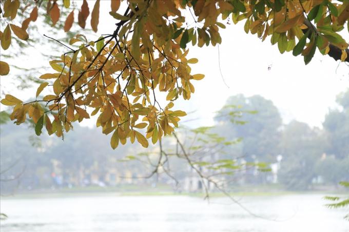 Hà Nội đẹp đến nao lòng mùa cây thay lá.