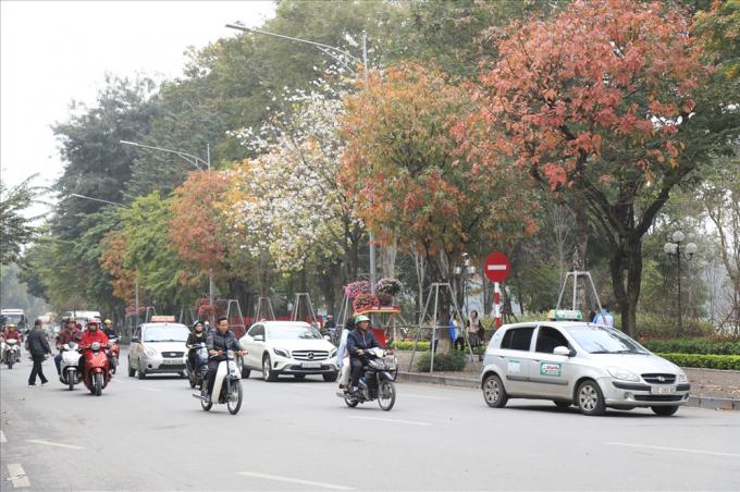 Mùa thay lá, đoạn đường ven Hồ Hoàn Kiếm đa sắc màu.
