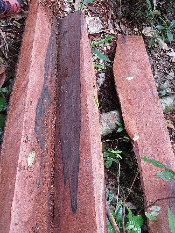 """Những bìa gỗ mun """"lâm tặc"""" để lại giữa rừng."""