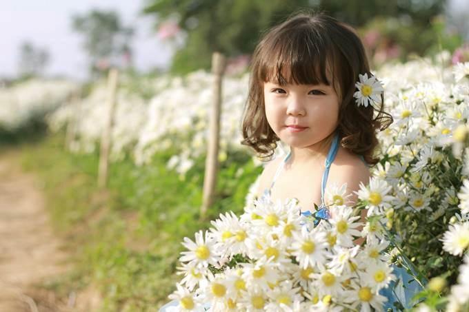 Hoa cúc họa mi hay còn gọi là Baby's pet hay Bairnwort có nghĩa là hoa của trẻ em. Những bông bông bé nhỏ đồng đều, trắng muốt chụm vào nhau, rung rinh trong từng cơn gió, bung tỏa hương sắc trong nắng vàng hoe như tô thêm nét đẹp trong sáng của thiên thần bé nhỏ.
