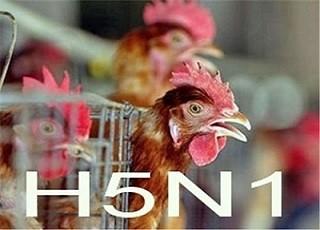 Cà Mau phát hiên trường hợp nghi mắc cúm A/H5N1. Ảnh: minh họa/Internet