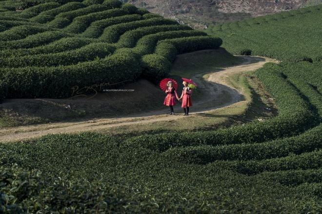 Mộc Châu là cao nguyên đẹp và rộng nhất miền núi phía Bắc với tiết trời mát mẻ quanh năm nên trở thành điểm du lịch nổi tiếng. Một số nơi thu hút du khách đến tham quan là những đồi chè xanh mướt, Ngũ Động Bản Ôn, xã Đông Sang, bản Áng, thác Dải Yếm hay khu rừng thông bản Áng.