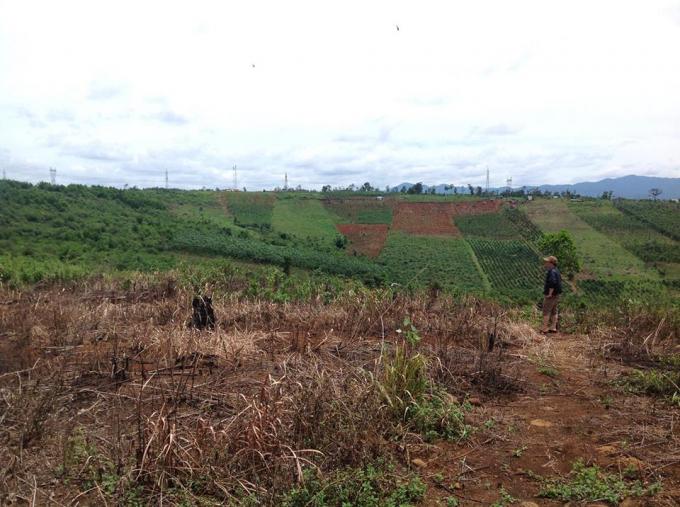 Khu vực rừng bị phá khiến thiếu tá Sáng vướng vào vòng lao lý.