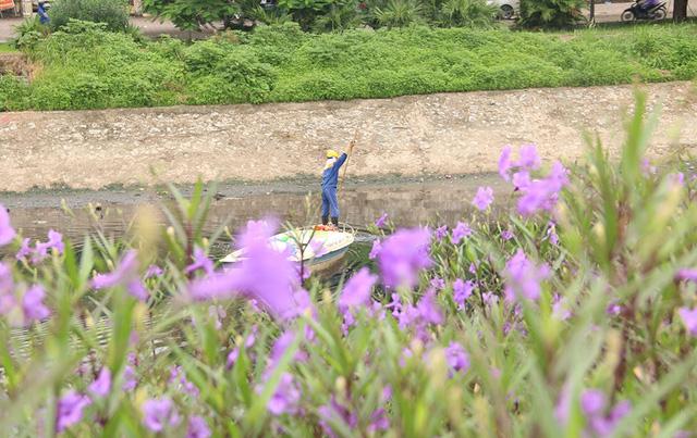 Hoa tím nở rộ bên bờ dòng sông nổi tiếng ô nhiễm, hôi thối.  Được biết, việc trồng hoa do người dân các thôn trong xã tự thực hiện, sau khi được chính quyền xã hỗ trợ dọn rác, san ủi mặt bằng.