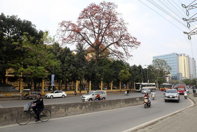 Cây gạo còn có tên gọi Mộc miên, Pơ lang, ở Hà Nội không trồng nhiều nhưng vào mùa hoa nở, sắc đỏ hoa gạo nổi bật lấn át các loại cây hoa khác.