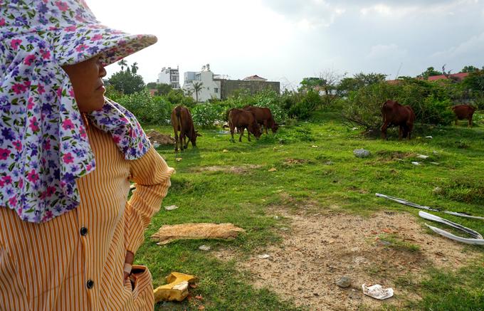 Khu đất rộng lớn được quy hoạch thành khu dân cư kiểu mẫu của thành phố trở thành nơi để chăn trâu bò, nuôi heo rừng, gà vịt...