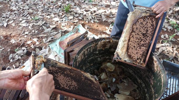 Cắt sáp ong thừa vít nắp để chuẩn bị quay mật
