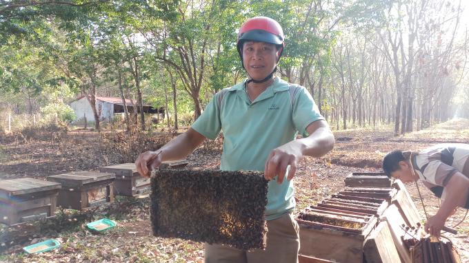 Một chủ ong tại Huyện Cư M' gar cho biết, do thời tiết phức tạp, mật ong mất mùa, rớt giá nên gặp nhiều khó khăn, phải giảm số lượng đàn.