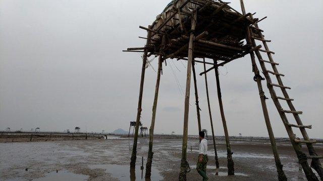 Đã có 11 hộ dân bị ảnh hưởng mất ngao, mất cát nền do bị hút trộm, đã gửi đơn thư tố cáo đến huyện Hậu Lộc. (Ảnh: Anh Thắng)