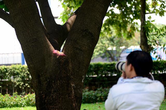 Nhiều người Sài Gòn thích thú với cây bàng, thường ra chơi và chụp hình.