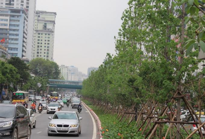 Trồng cây phong lá đỏ là một trong những việc làm nằm trong chủ trương của Thành phố Hà Nội trồng một triệu cây xanh giai đoạn 2016 -2020.