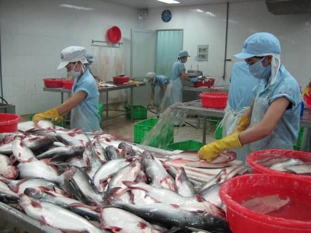 XK cá tra sang các thị trường trong khối ASEAN tăng trưởng tốt