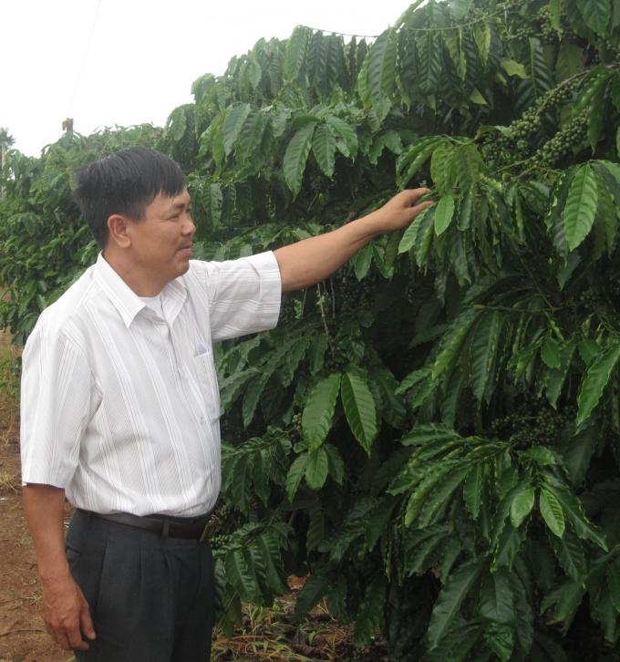 HTX cà phê của CCB Tạ Ngọc Quang