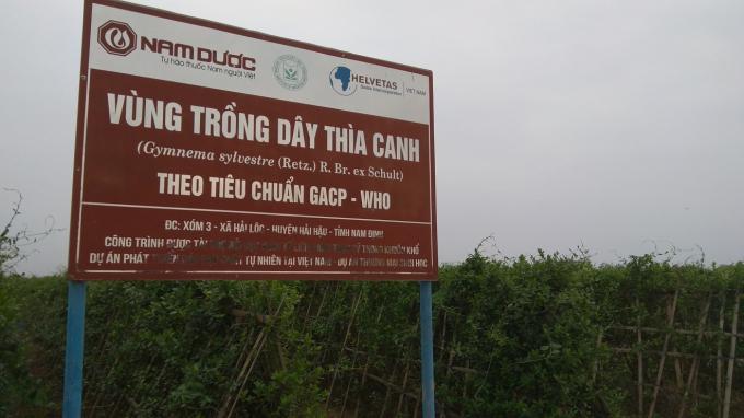 Vùng trồng Dây thìa canh theo tiêu chuẩn GACP-WHO của công ty Nam Dược tại Nam Định