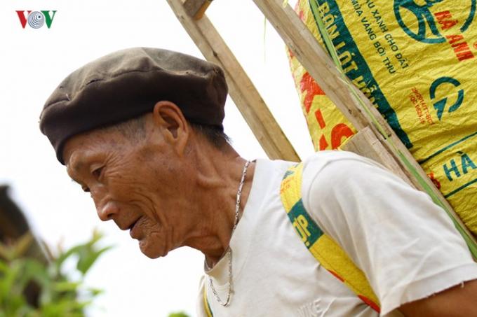 Có cả những người già tham gia thu hoạch cho kịp vụ