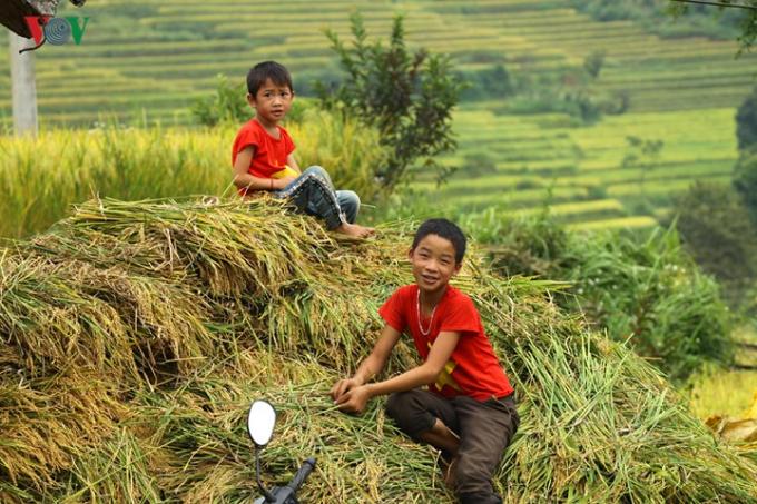 Năm nay, nhờ thiên nhiên ưu đãi nên hầu hết các cánh đồng lúa ở địa phương đều được mùa.