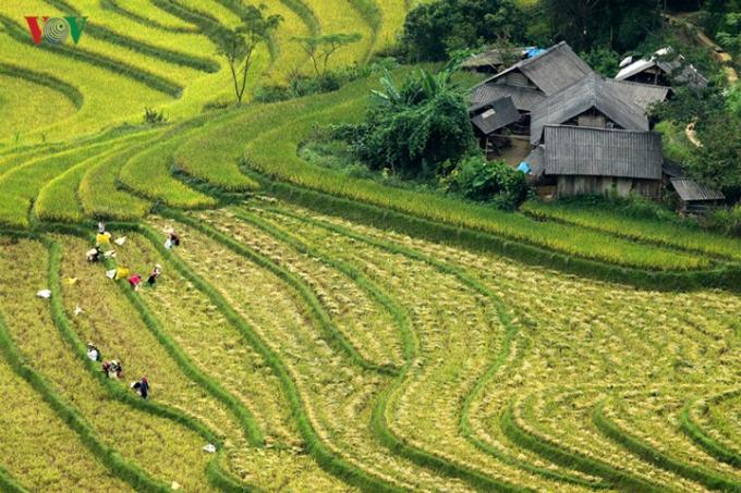 Do khó khăn về địa hình, nên đa phần diện tích đất nông nghiệp ở đây chi được bà con gieo cấy một vụ.