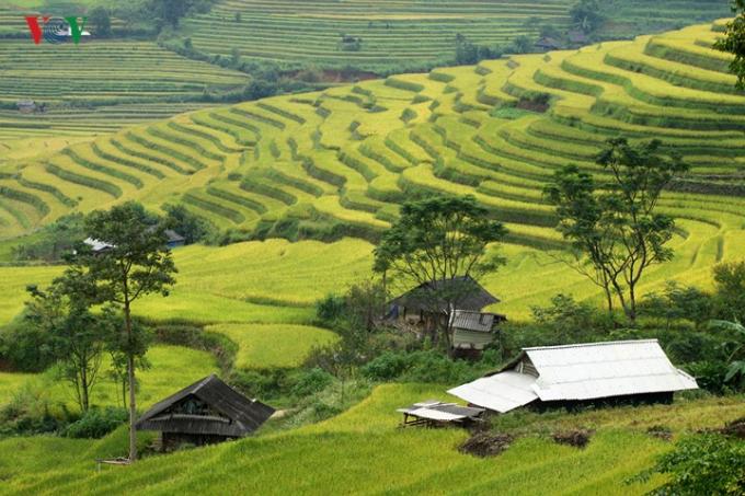 Những năm gần đây, vào mùa lúa chín, các bản làng nơi đây đón hàng nghìn lượt du khách.