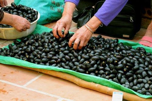 Khi đến mùa, quả trám đen được bày bán nhiều ở chợ.