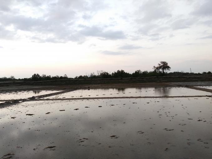 Diện tích rừng được Ban Quản lý Rừng phòng hộ giao khoán cho những người