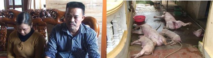 Đối tượng Đặng Văn Tuyền, Ngô Thị Nguyện cùng số lợn đã chết, bốc mùi hôi thối bị cơ quan chức năng bắt quả tang. (Ảnh: Bùi Thành).