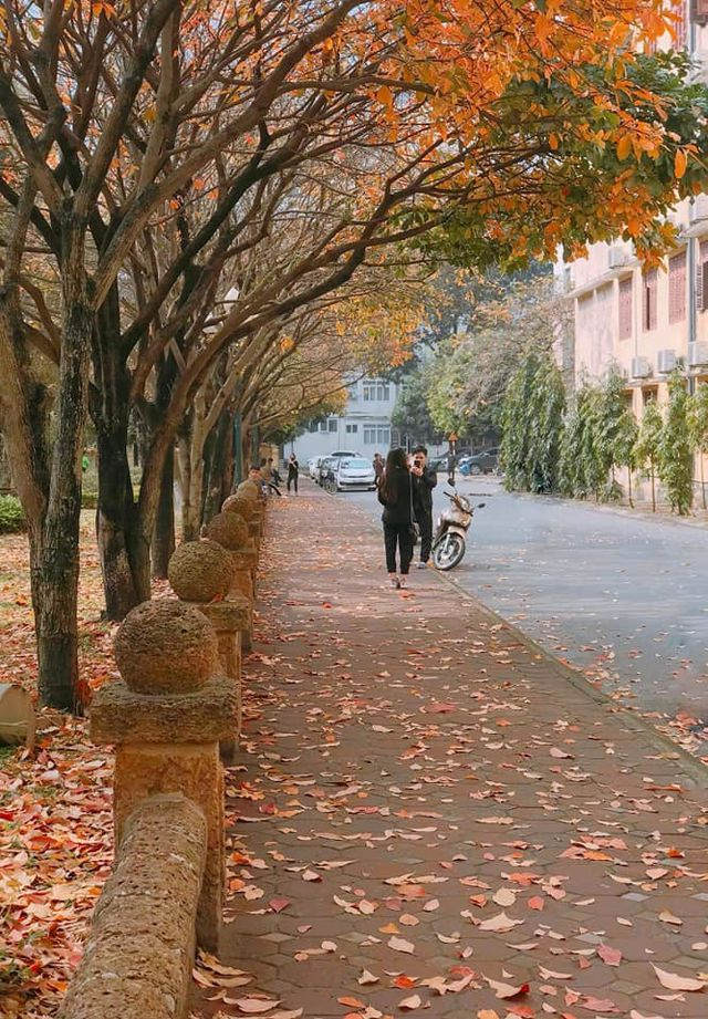 Cả con đường chỉ dài khoảng 1km nằm trong khuôn viên trường ĐH Sư phạm khoác lên mình màu áo vàng thơ mộng, vô cùng lãng mạn khác hẳn vẻ đẹp rực rỡ mùa cây trổ hoa. (ảnh: Long Lố)