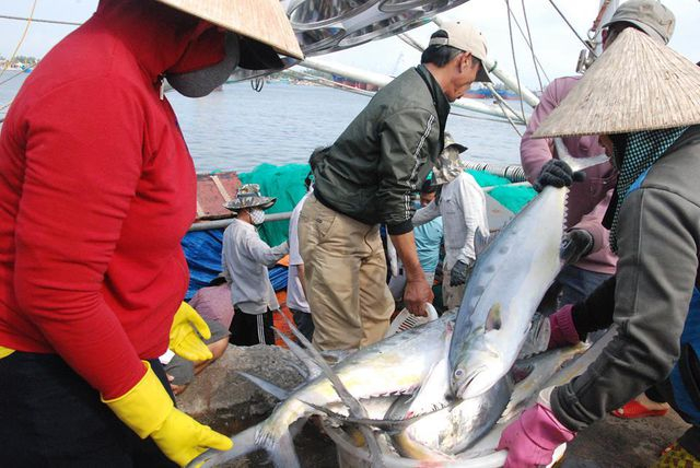 Ngư dân vận chuyển cá lên bờ bán cho thương lái.