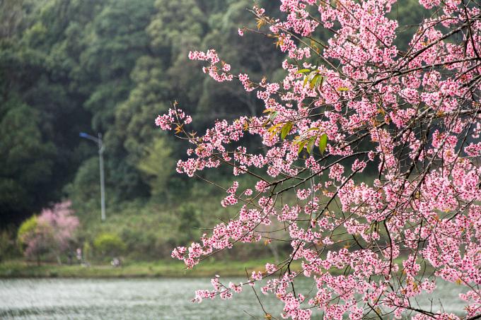 Dọc con đường, bên bờ suối mọi người như gặp toàn cảnh về hoa, những cánh hoa như hết mình với mùa xuân, hết mình với âm hưởng của đất trời và hoa đua nhau khoe sắc.