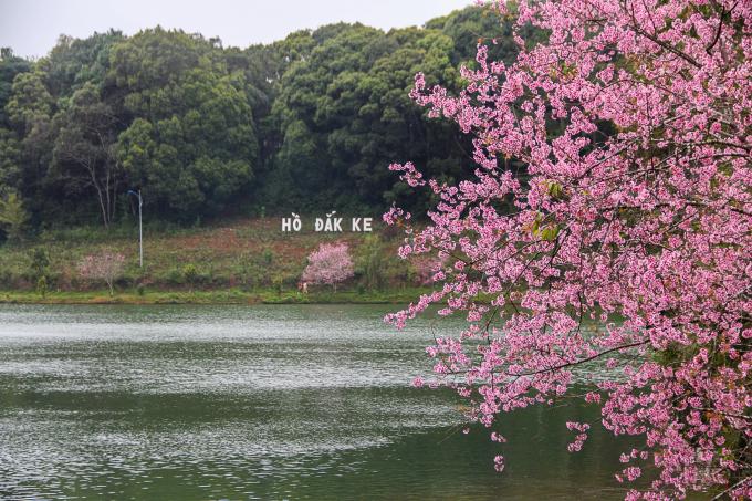 Hồ Đắk Ke nơi hoa Mai Anh Đào khoe sắc.