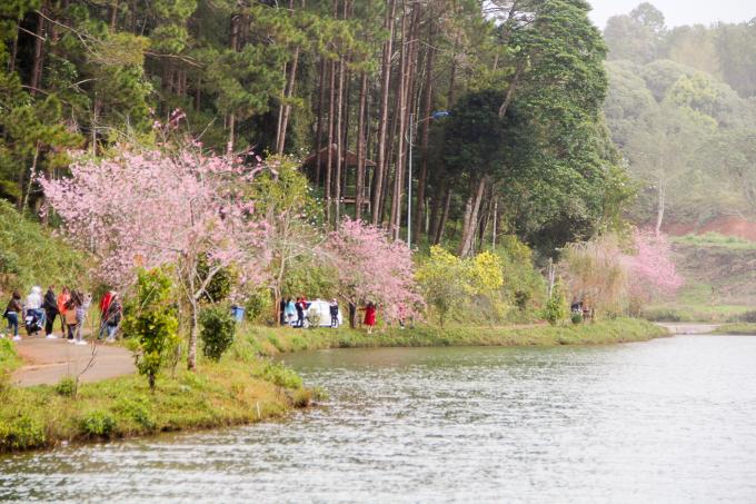 Du khách phương xa và những cặp đôi bản địa chụp hình cưới và hình luuw niệm bên gốc hoa.