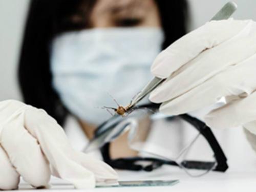 Cuộc chiến chống dịch bệnh do virus Zika vẫn còn nhiều thách thức. Ảnh:siemens