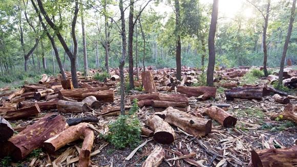Kết quả hình ảnh cho rừng ở dak lak bị xẻ thịt