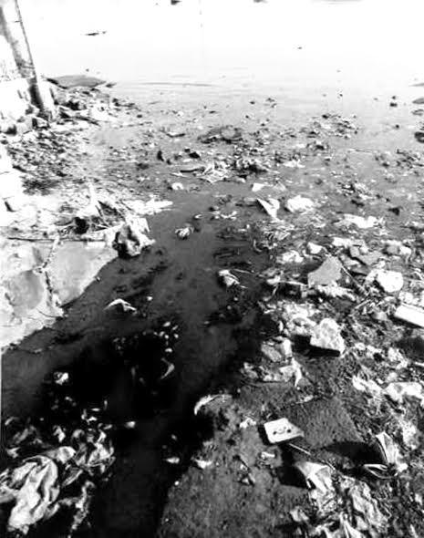 Nước thải tại vị trí cống xả Trường mẫu giáo khu vực 2 chảy thẳng ra đầm Thị Nại bốc mùi hôi tanh.