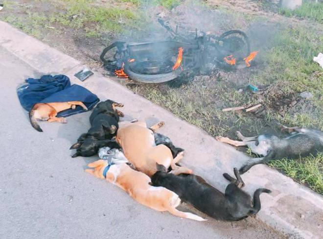 2 thanh niên đi trộm chó bị đánh thương vong. ảnh minh họa