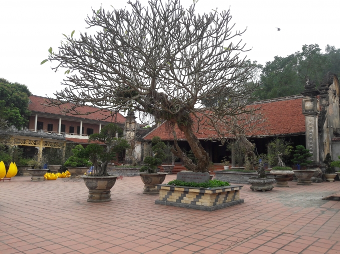 Chùa Hồng Phúc - nơi cung nghinh Phật Ngọc vì Hòa bình thế giới.