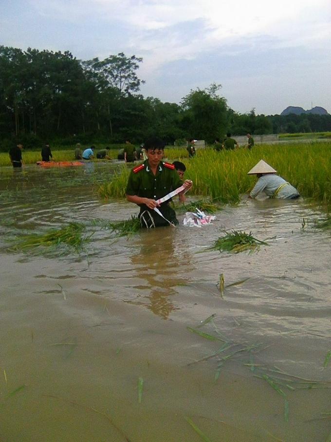 CSGT và Công an 2 huyện được huy động giúp dân gặt lúa chạy lũ