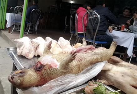 Theo một chủ hàng, thì đây là những chú cheo mới được bắn về, thịt của chúng vẫn còn tươi ngon mà giá thì lại rất rẻ, khoảng 400 nghìn đông/kg.