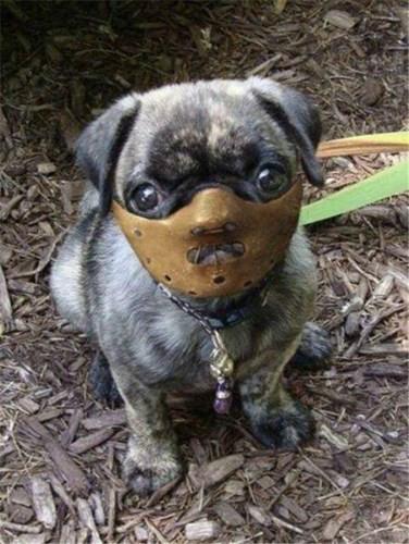 Nhìn khuôn mặt đáng thương của của chó kìa.