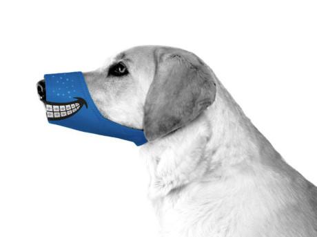 Nhìn chú chó này thời trang đấy chứ?