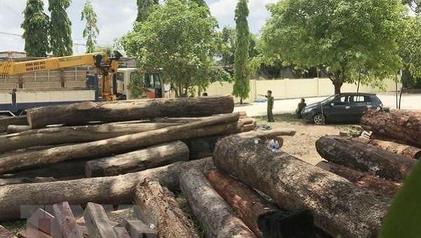 Số gỗ tang vật được lực lượng chức năng thu giữ. (Ảnh: Quang Huy/TTXVN)
